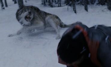 Nikada ne bi pogodili šta je ovoga čovjeka spasilo od napada vuka