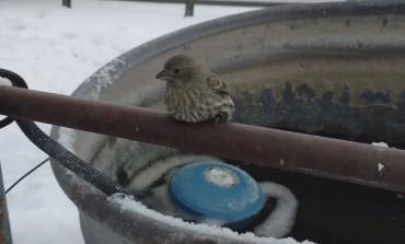 Srce da vam pukne: Maleni vrabac zaledio se za ogradu, a onda je ovaj čovjek pokazao kako izgleda humanost na djelu!