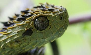 5 Najneobičnijih zmija na svijetu