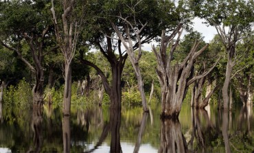 Čudesne činjenice o Amazonu: Sve samo ne obična šuma