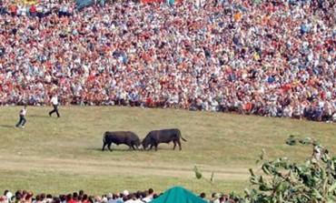 Najveća korida na Balkanu 30. jula na Čevljanskom polju