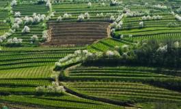 Vinska klet Brda i vina koja osvajaju tržite Bosne i Hercegovine