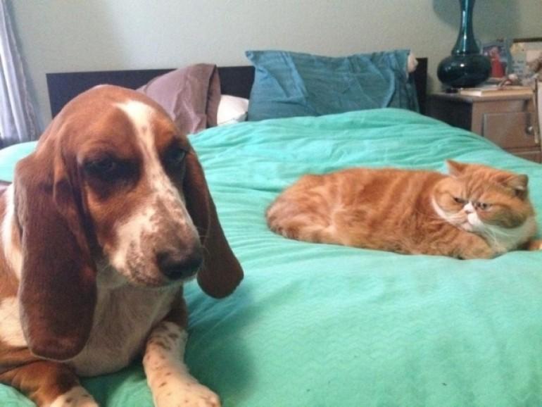 Za ljubitelje mačaka i one koji to nisu – ove fotografije vas neće ostaviti ravnodušnim!