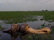 NAJJEZIVIJA STVORENJA U AMAZONU! Od samog pogleda slediće vam se krv u žilama! (VIDEO)