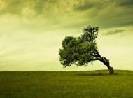 Izaberi drvo i otkrij šta to govori o tebi