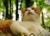 Da li su sretniji ljudi sa mačkama ili psima?