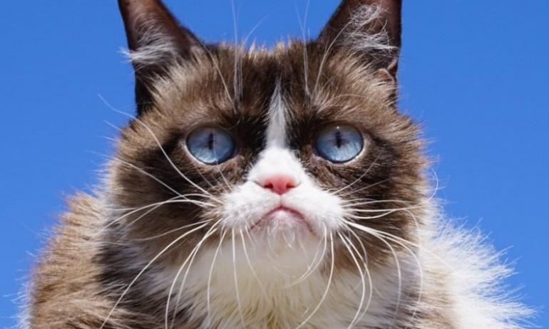 Umrla najpopularnija mačka na internetu
