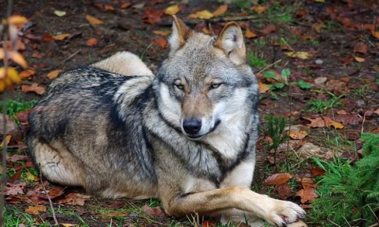 Tokom zime psima šape mazati glicerinom ili vazelinom