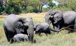 Slonovi u Zimbabveu umiru od suše i gladi