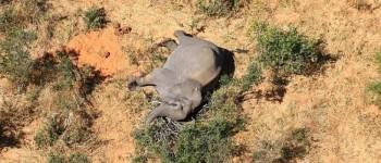 Stotine slonova uginulo u Bocvani